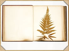 On page 13 of the book - Pteris tremula, Br